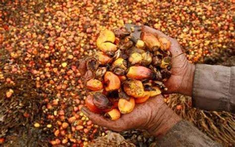 Ekspor Minyak Kelapa Sawit ekspor minyak sawit indonesia terus bertumbuh