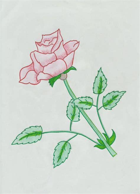 rose drawings  psd vector ai eps format