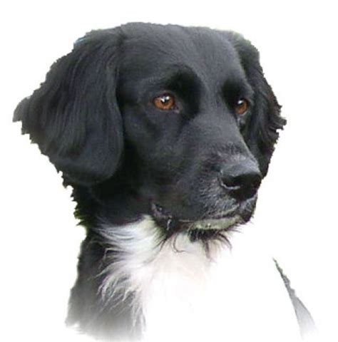 rare dog breeds puppies top 10 rare dog breeds rarest dog breeds diy home