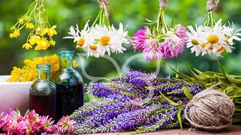 fiori di napoli trattamenti olistici chiara cesarini operatore