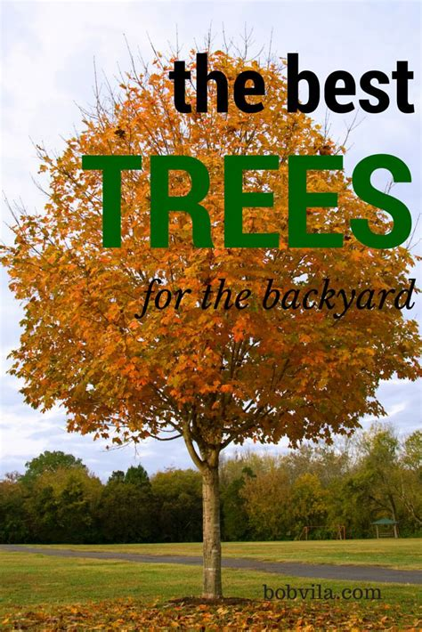 best tree to plant in backyard best front yard trees has debbcefd best trees to plant