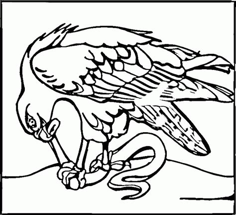seahawks coloring pages seahawks coloring page coloring home