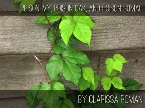 poison ivy oak and sumac information center www download suicide prevention a holistic approach