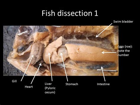 earthworm dissection conclusion grasshopper dissection worksheet the best and most comprehensive worksheets