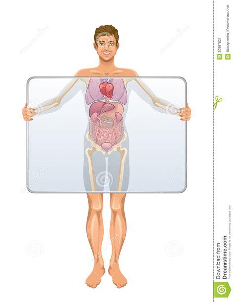 imagenes asombrosas del cuerpo humano anatom 237 a del cuerpo humano imagen de archivo imagen