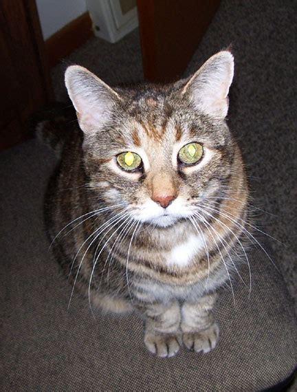 Universal Kitten w9wqa universal radio customer cats