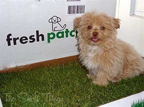 real grass potty fresh patch disposable potty with real grass as seen on shark tank animals pet