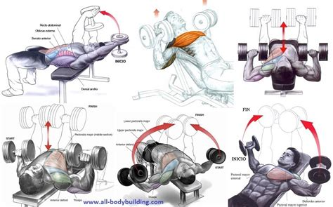 best bench workout for chest the best dumbbell chest exercises gym workout chart