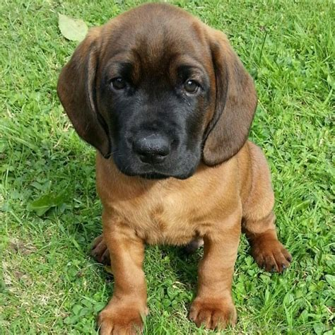 leaving puppies animal wallpapers page 2