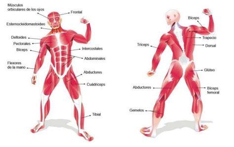 cadenas musculares espiral la energia que consumimos por el movimiento cursos