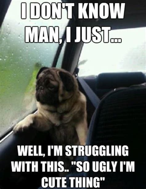 Ugly Dog Meme - cute pug memes