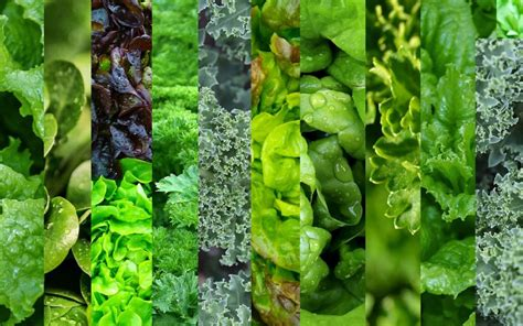 vegetables greens did you about these great vegan sources of protein