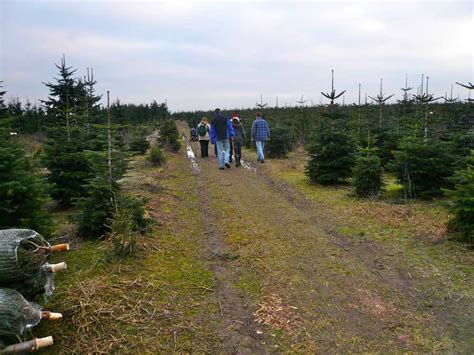 best 28 weihnachtsbaum selber schlagen brandenburg