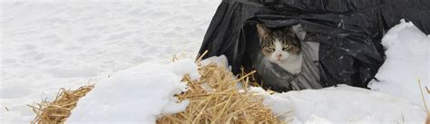 how to a to outside only neighborhood cats how to tnr feral cat winter shelter