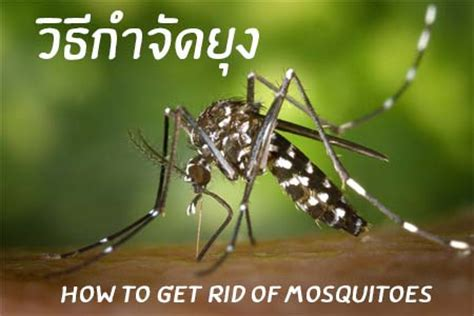 get rid mosquitoes backyard how to get rid of mosquitoes in backyard 28 images how
