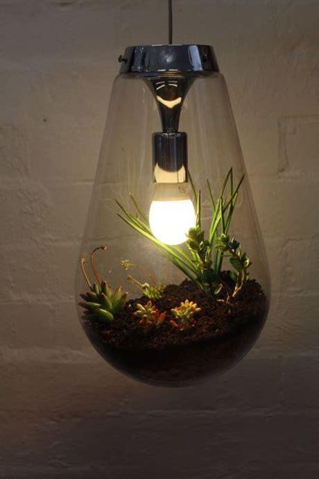 Terrarium Light Fixtures Miniscapes Clea Cregan Smart Pinterest Cactus Terrarium And Lightbulbs