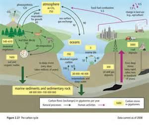 nitrogen cycle worksheet abitlikethis