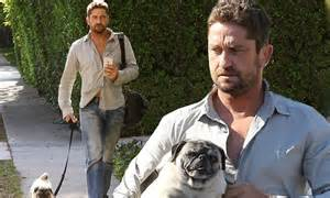 gerard butler pug gerard butler takes pug for a walk in west daily mail