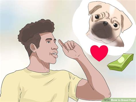 how to breed a pug how to breed pugs with pictures wikihow