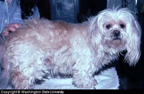 skin irritation on dogs a guide to skin irritation in canines including tips and