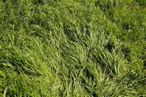 Course On Lawns What You Should by Best Grass Types For Lawns And Landscaping Services