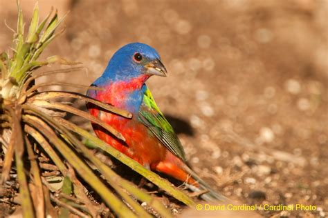 texas hill country bird photo safari workshop may 2017
