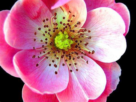flower wallpaper mp3 mp3 latest songs free download beautiful flowers