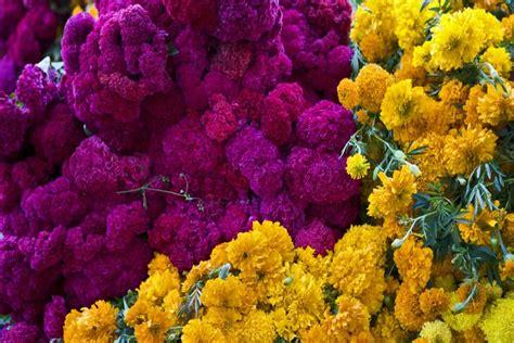 imagenes de flores de muertos fondos flores dia de
