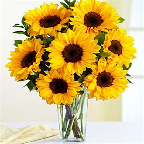 Sunflowers In Vase by Beautiful Seven Sunflower Combo With Vase Home Decor