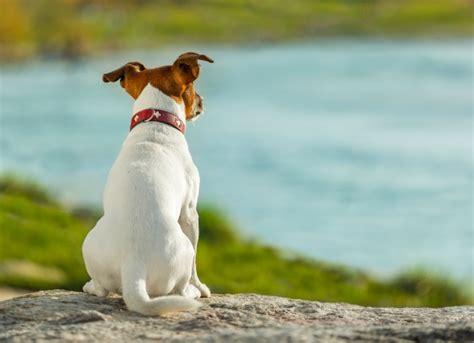 gland cancer in dogs gland cancer in dogs petmd