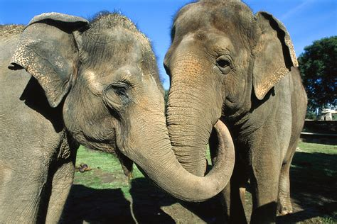 comfort animal surprise elephants comfort upset friends