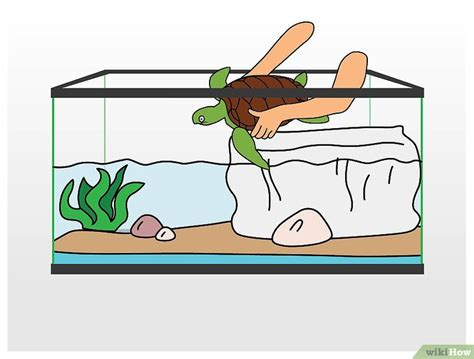 vasca tartaruga come pulire la vasca della tartaruga 14 passaggi
