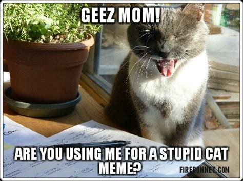 Cat Mom Meme - cat tledog comic tuesday cat memes meghan aka firebonnet