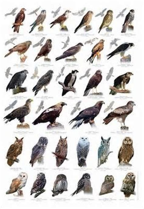 southern california wild birds identification yahoo