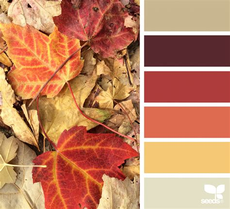 design seeds instagram fallen hues design seeds
