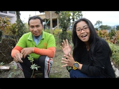 Bibit Anggrek Jember okulasi bunga mawar doovi