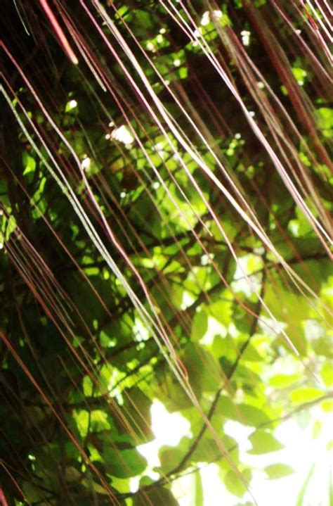 abstract jungle pattern abstract jungle pattern free stock photo by ian l on