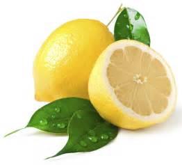 lemon photo organic lemon sahul trading corporation