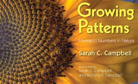 patterns in nature elementary math oh happy day fibonacci poetry