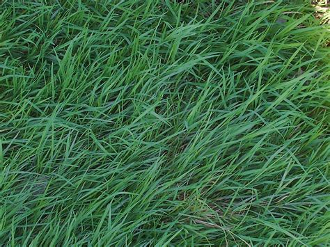 family tree and turf care grass types