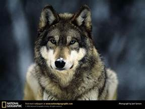 The Blind Side Speech About Courage 1000 Images About Wolves On Pinterest