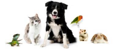 Pet Sitting Image Gallery Pet Sitting