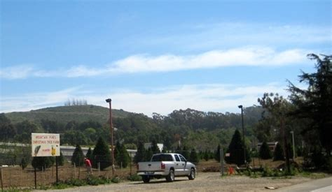 mountain pines christmas tree farm san juan capistrano