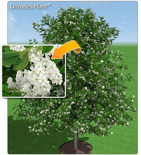 Landscape Design Software Plant Encyclopedia 24 Beautiful Garden Landscape Design Software And Plant