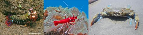 coral reef crustaceans from sea to papua books coral reefs