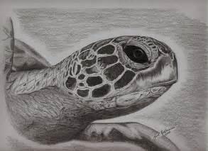 turtle pencil sketch hidden name kurt rohlmann flickr