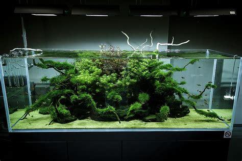 Ada Aquascape by Ada Nature Aquarium Gallery Planted Aquarium Aquarium