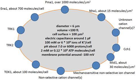 frontiers quantitative description  ion transport