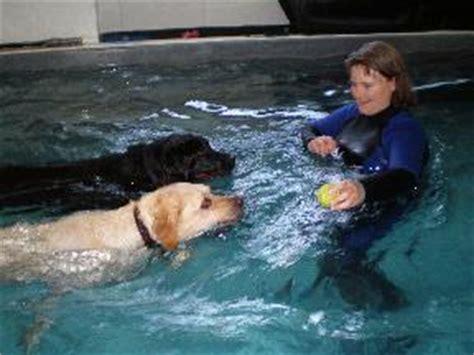 puppy daycare seattle spawz daycare and swim center in seattle wa 98103 citysearch