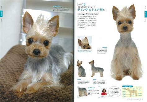 ksl shih tzu grooming terrier haircuts style catalog book new from japan ebay